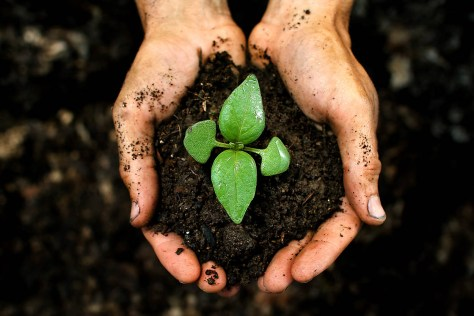 A photograph showing two hands together holding a clod of earth with a small green seedling.