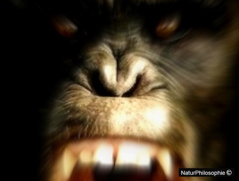 A blurred photograph featuring the face of an angry ape chimpanzee. Image: NaturPhilosophie