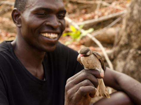 A photograph showing honey hunter Orlando Yassene with a greater honeyguide bird in Mozambique's Niassa National Reserve. Orlando is smiling at the little bird who is perching on his hand.