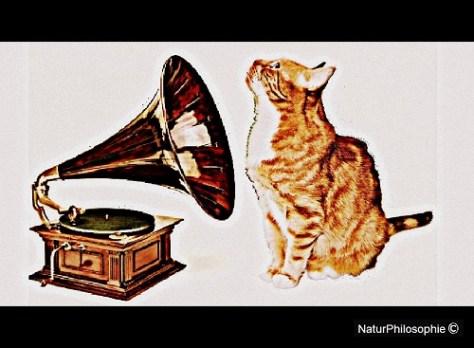 """""""His Mistress's Voice"""" - original artwork starring Quark the cat pictured in 2011. Image: NaturPhilosophie"""