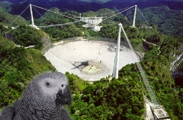 Arecibo and the Great Silence – Where We Talk About a Parrot Named Alex