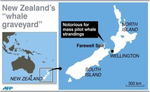 Two maps pinpointing the location of  the Farewell Spit in New Zealand.  Source: AFP