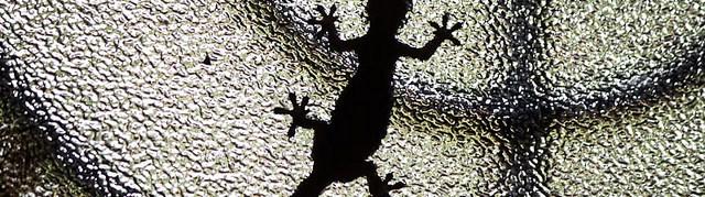 Van der Waals and the Gecko