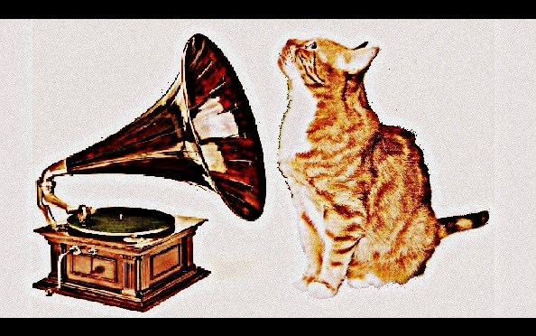 Music for Cats… – Guaranteed to be your Cat's Jam!