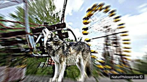 A pseudo-photograph focusing on a grey wolf howling, with the abandoned Pripyat amusement park, near Chernobyl, Ukraine, in the background. Collage: NaturPhilosophie (2018)