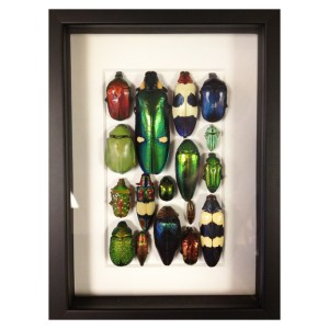 Frame-Collection-of-beautiful-beetles