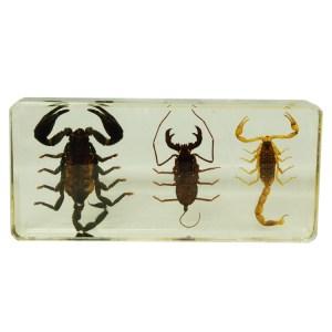 3 scorpion set