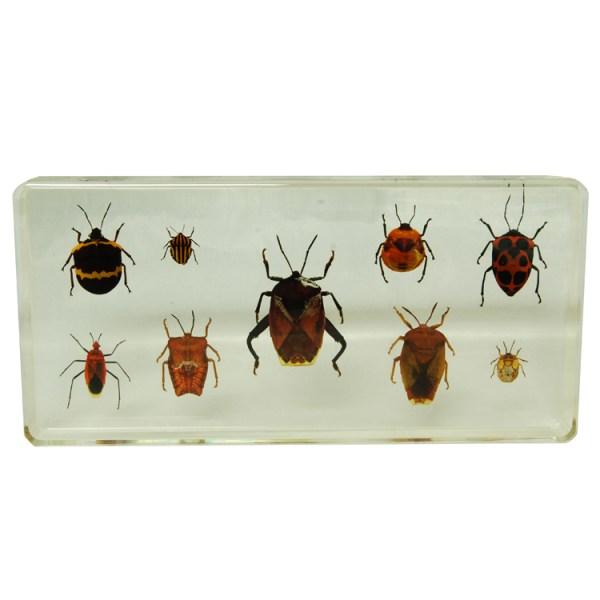 9 beetles set