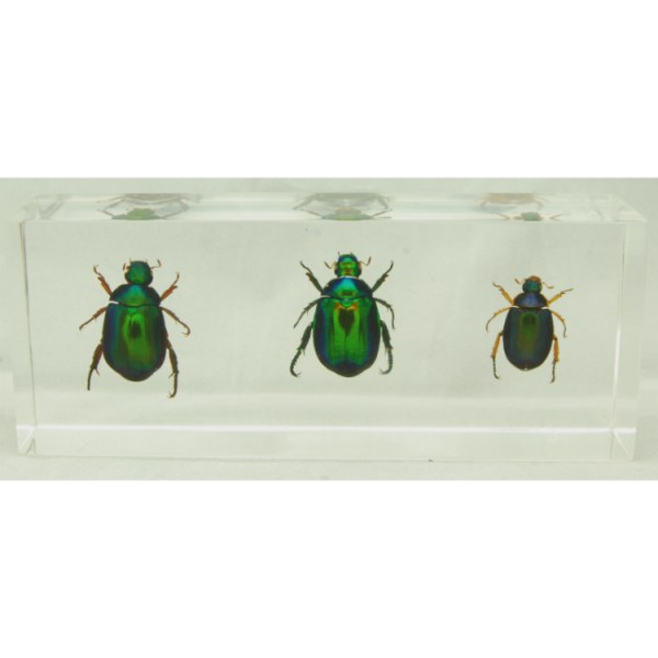 3 colorful scarabs