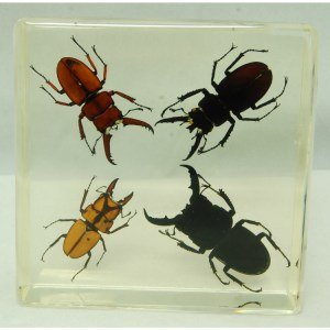 4 Stag Beetles