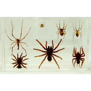 7 spiders