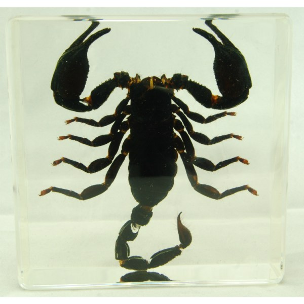 Scorpion large