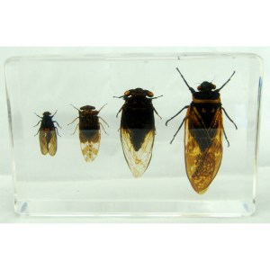 set of 4 cicadas