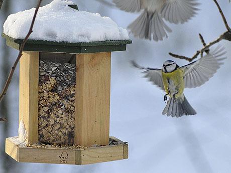 Naturtipps - Vögel am Futterhaus