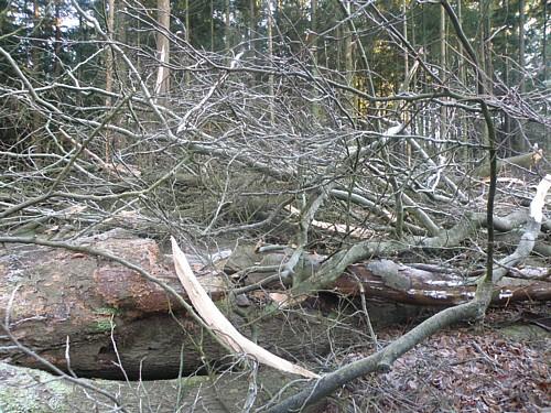 Afbeeldingsresultaat voor hout vasthouden spreekwoord