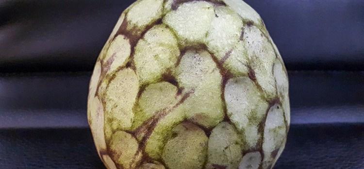 De cherimoya, wat is het en wat moet je er mee?