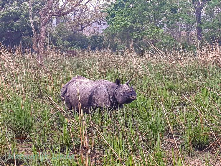 Natuurlijk Linda Nepal Chitwan neushoorn
