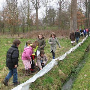 Kinderen helpen bij een paddenoverzet