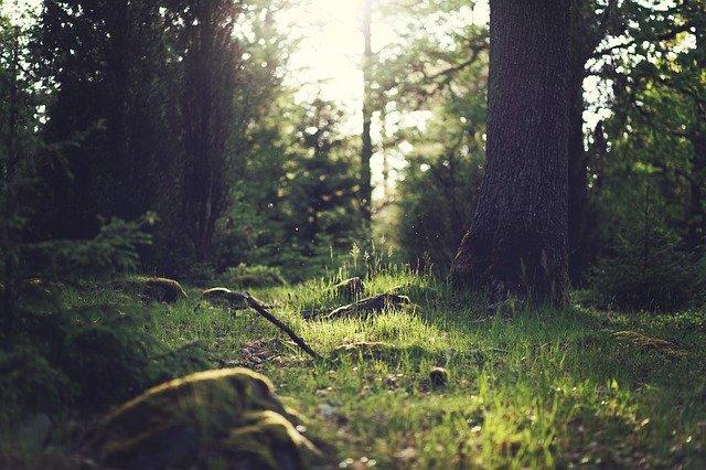 Bos en groen als buffer voor CO2