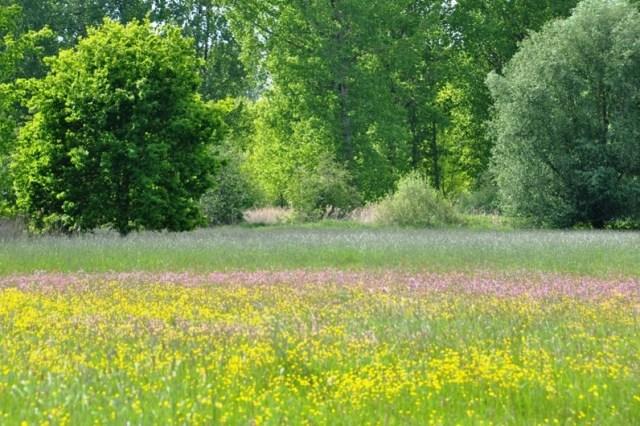 Bloemrijke graslanden in de Mombeekvallei