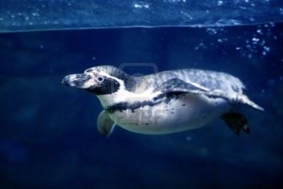 🐸 Ćwiczenie do żabki – przepływanie pod linami torowymi