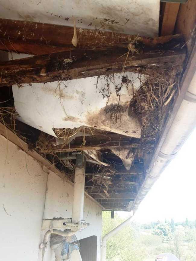 Lambris Sous-toit Dégradé