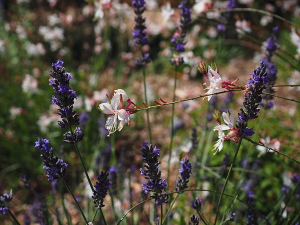 Flowers - how to use sensual overexcitability