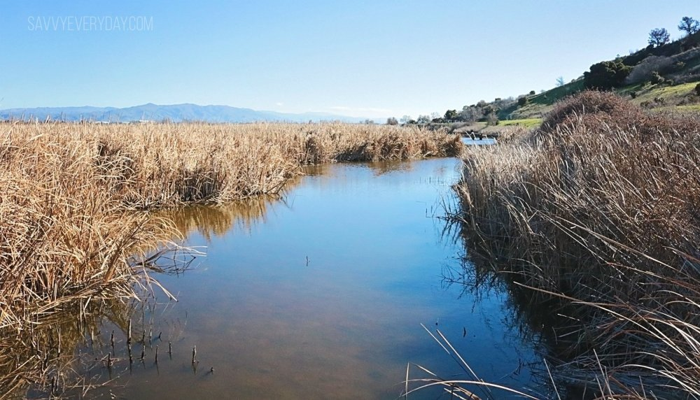 dry grass river