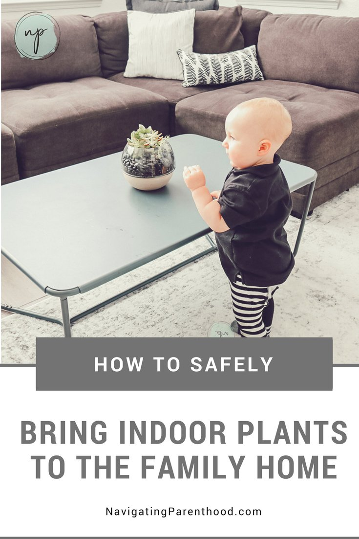 Unless my outdoor plants are connected to a drip system they're probably going to dry up. So instead, I keep plants inside the house! How do I do this with kids ranging from ages 1-7? Well, there are 3 ways to safely bring indoor plants to the family home. Keep reading!