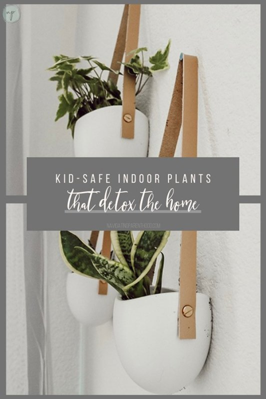 Kid-Safe Indoor Plants that Clean the Air