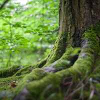 Spiritual Heritage | The Navigators Discipleship Resources | Mossy tree in a forest