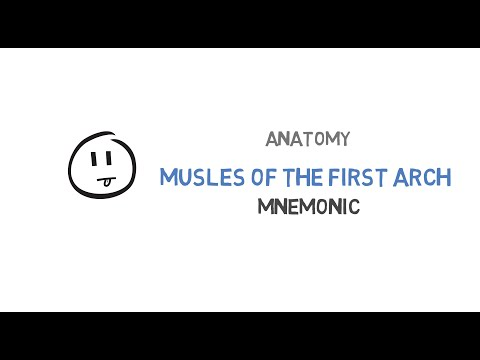 Muscles of the first arch