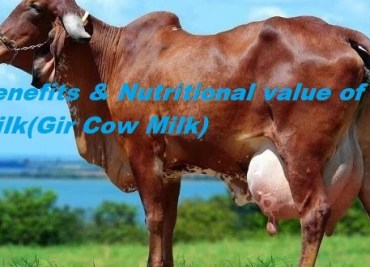 Benefits & Nutritional value of A2 Milk(Gir Cow Milk)