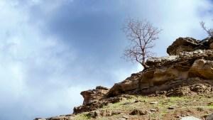 Tree on a mountain