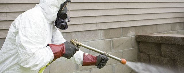 شركة مكافحة النمل الابيض بالقصيم ببريدة بحائل