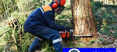 عمال قص أشجار بالرياض