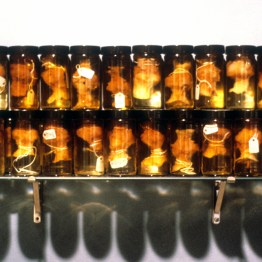 March, 1988, apple cores, vodka, paper tags, glass jars, 8 x 20 x 4 inches
