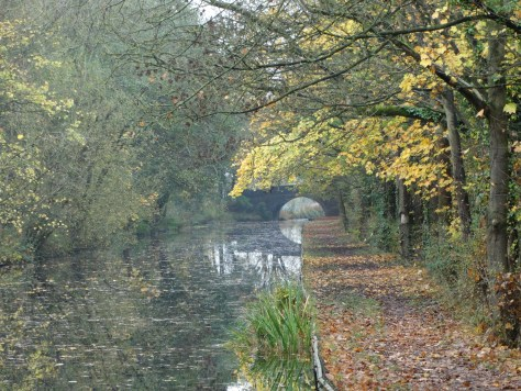 Leaves falling into the canal with the gentle breeze