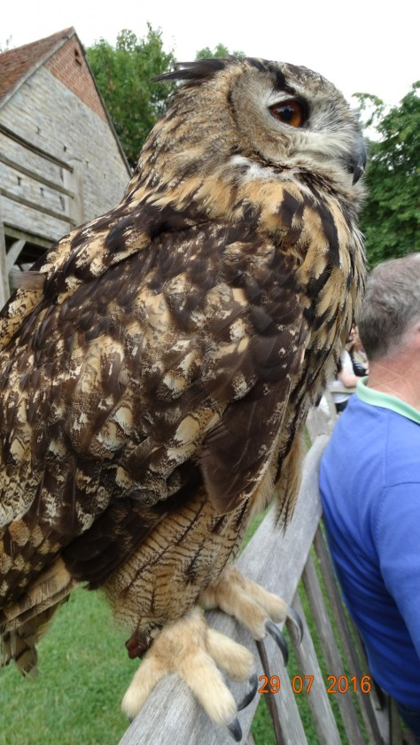 Talia the 28 year old Eagle Owl. A close encounter!