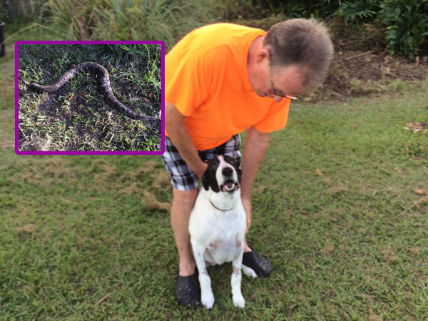 Man says dog saved his life from rattlesnake bite