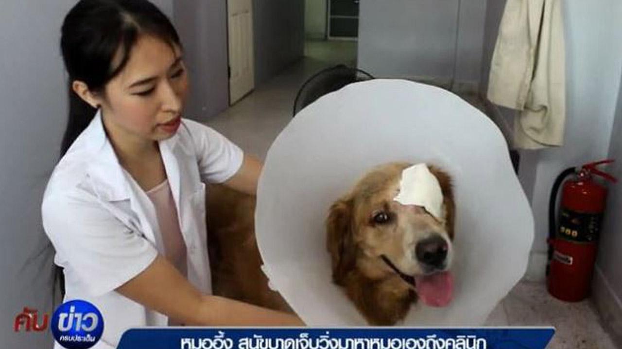 010818-thai-dog-1280x720_0_378148
