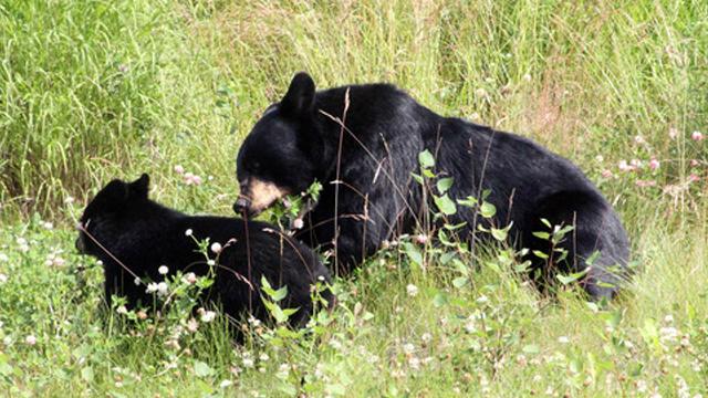 Bears_1525683709258_41903159_ver1.0_640_360_1525684288898.jpg