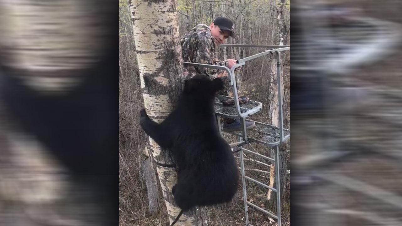 black-bear-cub-encounter_1526564356742.jpg