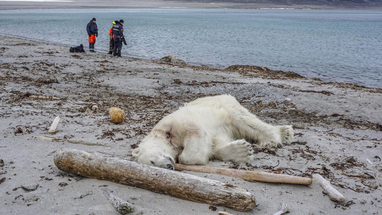 Norway-Polar Bear Attack_1532817336116