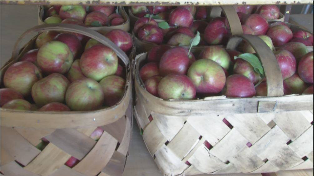 apples_1534812090339.jpg