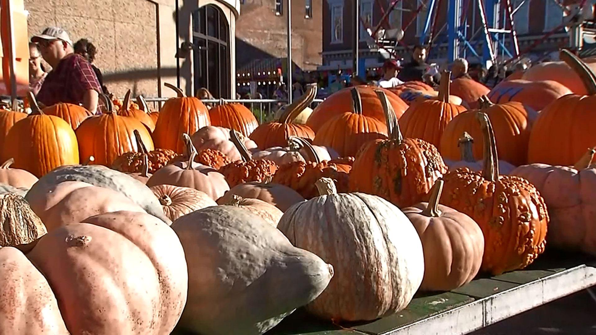 pumpkins_1536025868493.jpg