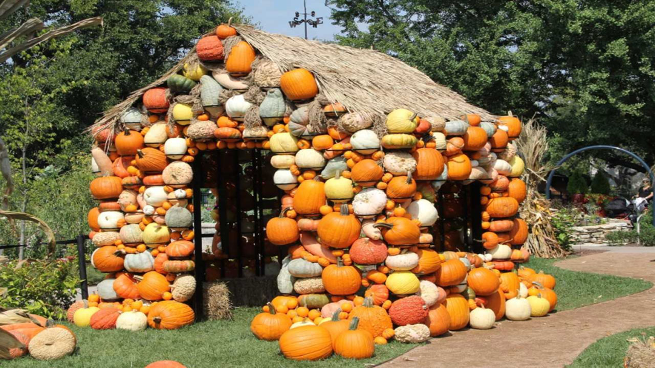 PUMPKIN HOUSE_1540376541124.jpg.jpg