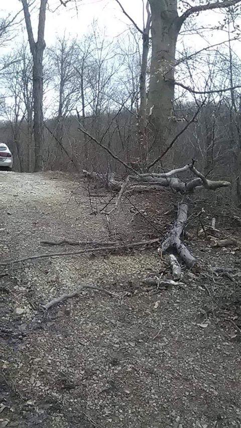 Leah Denver Parker tree down in drive_1551110274109.jpg.jpg