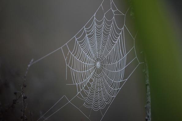 cobweb spider-846653543