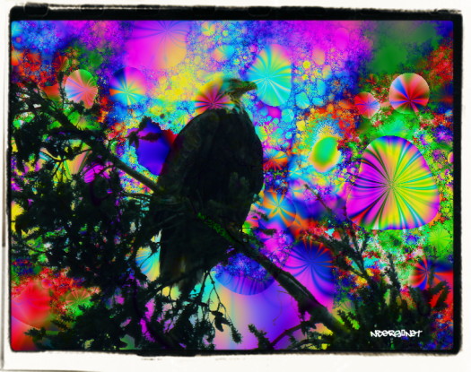Eagle psychedelic